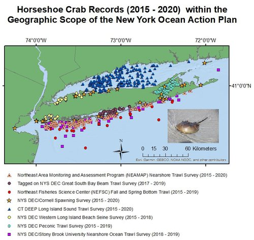 Map of horseshoe crab records within the geographic scope of the New York Ocean Action Plan.